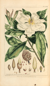 MILLER Figures Of the most Beautiful Plants livres rares edition originale livres anciens camille so...