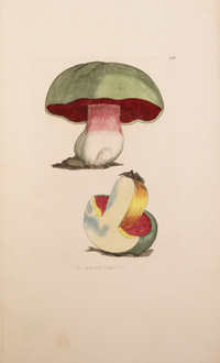 SOWERBY Coloured figures of English Fungi or Mushrooms livres rares edition originale livres anciens...